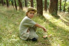 Champignons de couche de cueillette de garçon dans une forêt. Images libres de droits