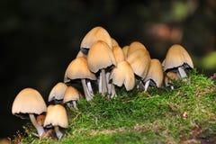 Champignons de couche de forêt photographie stock libre de droits