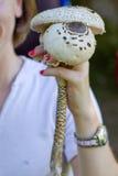 Champignons de couche de forêt Photographie stock