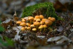 Champignons de couche de forêt Photos stock
