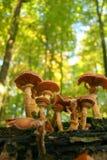 champignons de couche de forêt Image stock