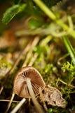 Champignons de couche de forêt d'automne Photographie stock