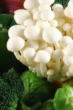 Champignons de couche de hêtre blanc Photo libre de droits