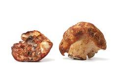 Champignons de couche de langoustine images stock