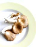 Champignons de couche de plaque Photos libres de droits