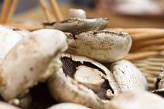 Champignons de couche de Portabello dans un panier Images libres de droits