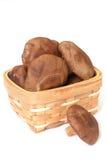 Champignons de couche de Shiitake image libre de droits