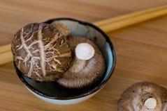 Champignons de couche de Shiitake Image stock