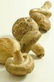 Champignons de couche de Shiitake Photo libre de droits