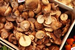 Champignons de couche de Shiitake organiques Photos libres de droits