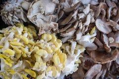 Champignons de couche de Shiitake organiques Photos stock