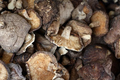 Champignons de couche de shiitake secs Photo stock