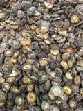 Champignons de couche de shiitake secs Photo libre de droits