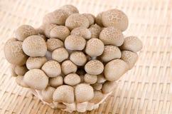 Champignons de couche de Shimeji de Buna Photo libre de droits