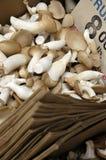 Champignons de couche de trompette Photo libre de droits