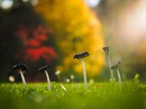 Champignons de couche en automne photographie stock libre de droits