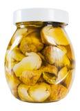 Champignons de couche en pétrole Photo stock