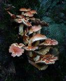 Champignons de couche de forêt photo stock