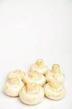 Champignons de couche frais Photographie stock libre de droits