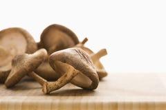 Champignons de couche frais. image libre de droits