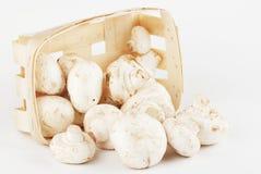 Champignons de couche frais dans un cadre en bois Photo stock