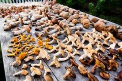 Champignons de couche frais de forêt Image stock