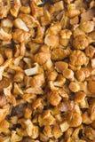 Champignons de couche frits délicieux Photos stock