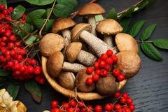 Champignons de couche Ingrédients d'aliment biologique Images libres de droits