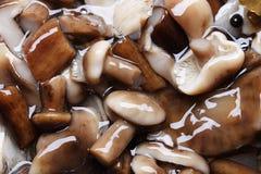 Champignons de couche marinés Images libres de droits
