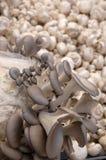 Champignons de couche organiques Images libres de droits