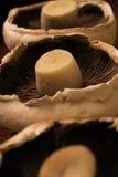 Champignons de couche organiques Image libre de droits