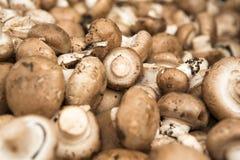 Champignons de couche organiques Photo stock