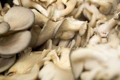 Champignons de couche organiques Image stock