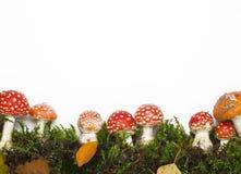 Champignons de couche rouges Image stock