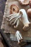 Champignons de couche sauvages Photographie stock