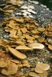 Champignons de couche sauvages Photos libres de droits