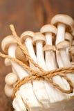 Champignons de couche sauvages frais Photos stock