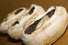 Champignons de couche savoureux Photo libre de droits
