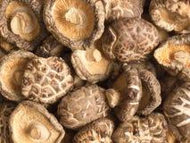 Champignons de couche secs de shitake Photographie stock libre de droits