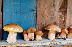 Champignons de couche sur le fond en bois Images libres de droits
