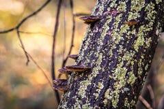 Champignons de couche sur le joncteur réseau d'arbre Image stock