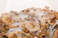 Champignons de couche surgelés Champignons en glace Actions des champignons pour l'hiver Photo libre de droits