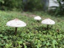 Champignons de la Floride Image stock