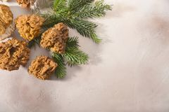 Champignons de morelles et branches de sapin dispos?es sur le fond clair photos stock
