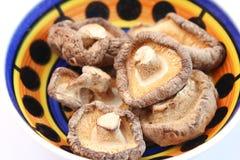 Champignons de shiitaké Photo libre de droits