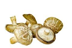 Champignons de shiitaké d'isolement sur le fond blanc Image stock