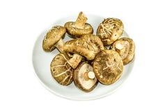 Champignons de shiitaké d'isolement sur le fond blanc Photo libre de droits