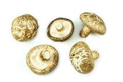 Champignons de shiitaké d'isolement sur le fond blanc Images stock