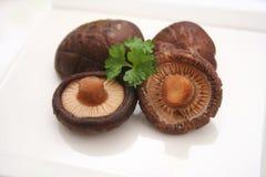 Champignons de shiitaké frais Image libre de droits