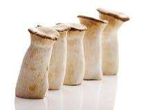 Champignons de trompette de roi (eryngii de Pleurotus) photographie stock libre de droits